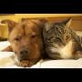 Hund und Katze, nebeneinander schlafend